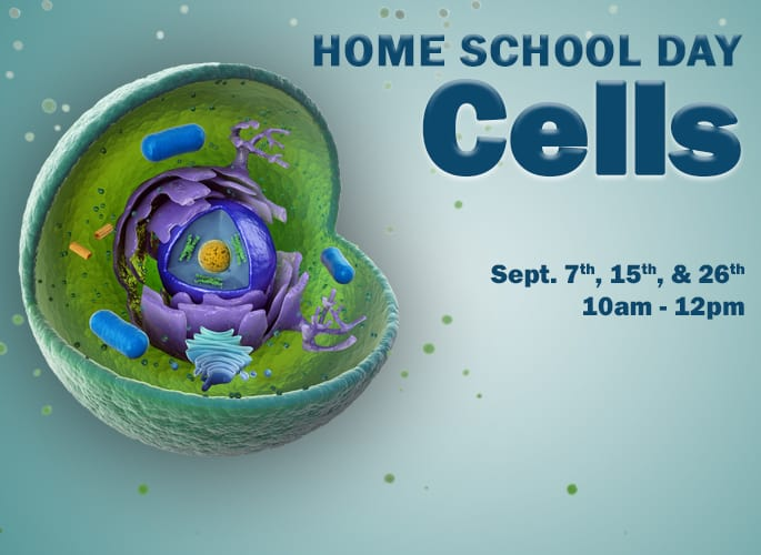 Home School Day – Cells